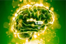 Cbd Benefits 1024x633 1020x631
