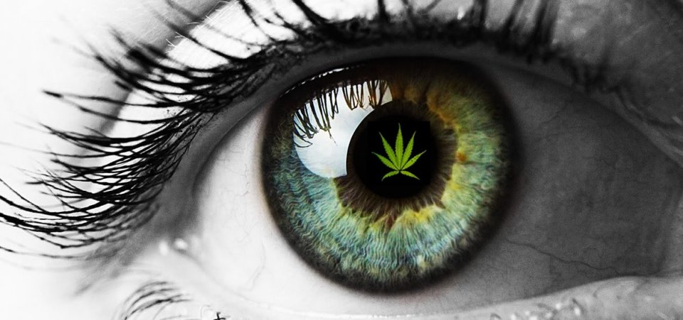 CBD EYE Copy