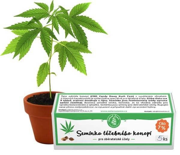 Semínka léčebného konopí 5ks